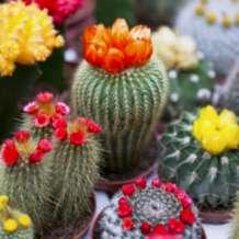 Cactus-show-1549101239