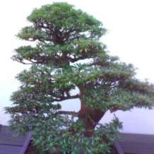 Bonsai-boot-sale-1579008638