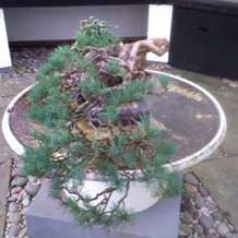 Bonsai-demonstration-1580414424