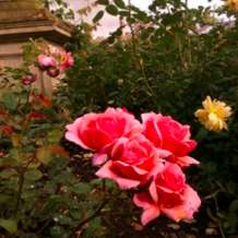Guided-tour-rose-garden-1580414833