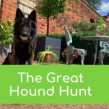 The-great-hound-hunt-1564131814