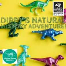 Birds-sights-and-sounds-dippy-s-natural-history-adventures-1532541546