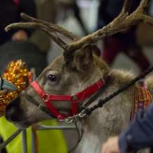 Meet-rudolf-s-real-life-reindeer-friends-1539851674