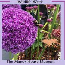 Wildlife-week-crafts-1563273251