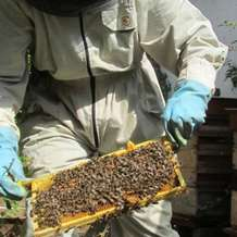 Bee-keeping-course-1484689123