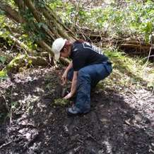 Moseley-bog-joy-s-wood-volunteer-day-1478725287