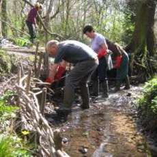 Moseley-bog-joy-s-wood-volunteer-day-1484690134