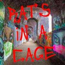 Rats-in-a-cage-1527840092
