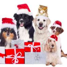 Hounds-of-the-lounge-christmas-party-1576144342