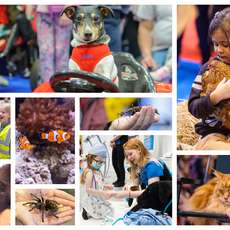 The-national-pet-show-1533224209