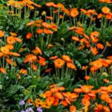 Bbc-gardeners-world-live-1583320225