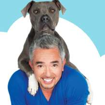 Cesar-millan-live-uk-tour-2013-1351242483