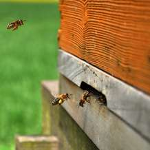 Introduction-to-beekeeping-workshop-1386495921
