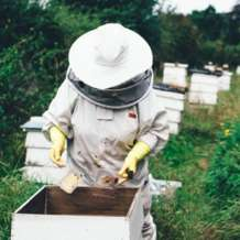 Introduction-to-beekeeping-1534934057